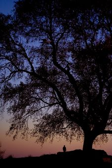 Free Sunset Tree Royalty Free Stock Image - 5426226