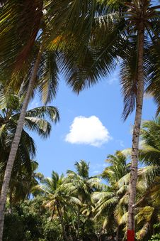 Free Palm Tree Border Royalty Free Stock Images - 5427129