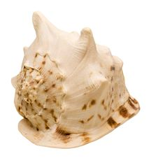 Free Pacific Snail Hat-shaped Royalty Free Stock Photo - 5428235