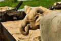 Free Indian Elephants Stock Photo - 54245240