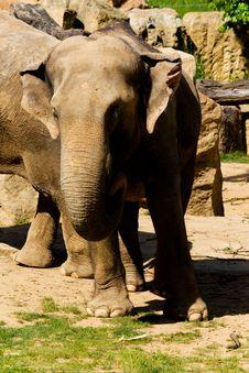 Free Elephant Stock Photo - 54241840