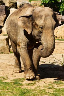 Free Elephant Stock Images - 54242924