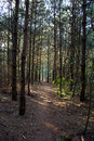Free Little Path Through The Forest Stock Photos - 5430773