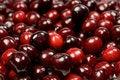 Free Fresh Cherry Stock Photo - 5431440