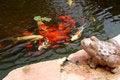 Free On A Pond Stock Photos - 5431603