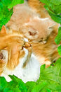 Free Cats In A Framework From Leaves Royalty Free Stock Photography - 5432127