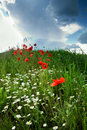 Free Poppy-field Dramatic Sky Royalty Free Stock Images - 5434569