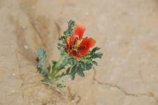Free Spring In Desert Stock Photos - 5430953