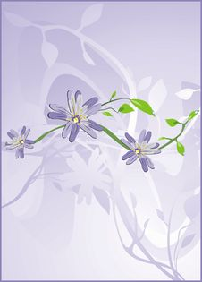 Chamomiles. Floral Background Royalty Free Stock Image
