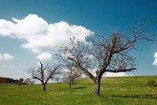 Free Trees Stock Photos - 5431193