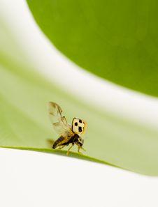 Free Yellow Ladybug Stock Photos - 5431313