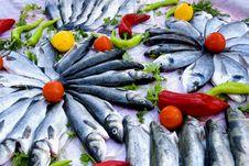 Free Sea Bass.. Royalty Free Stock Photography - 5431417