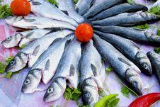Free Sea Bass... Stock Photos - 5431443