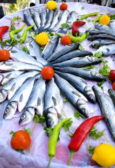 Free Sea Bass.. Royalty Free Stock Images - 5431549