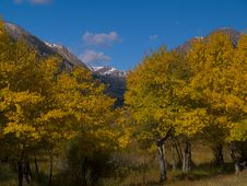Free Aspens Cloaking Mountains Stock Photo - 5431570
