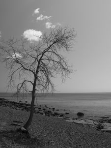 Free Lone Tree On Shore Royalty Free Stock Photography - 5431597
