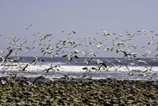 Free Seaguls Take Off Stock Photography - 5431622