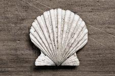 Shellfish Stock Photography