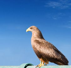 Free Snake Eagle Royalty Free Stock Photo - 5432245