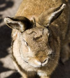 Agger The Not So Baby Rabbit Stock Images