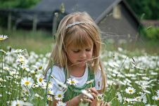 Free Field Of Dreams Stock Image - 5432711