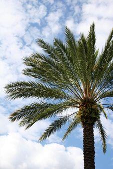Free Palmtree And Sky Stock Image - 5432791