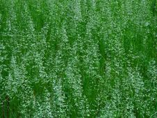 Free Fresh Grass Royalty Free Stock Image - 5433006