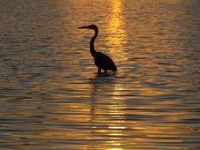 Free Blue Heron Stock Photo - 5433100