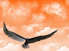 Free Eagle In The Sky Stock Image - 5434551
