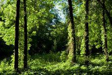 Free Green Forest Stock Photos - 5434663