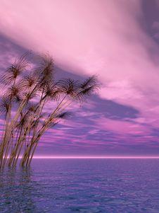 Free Water Grass Stock Photo - 5436580