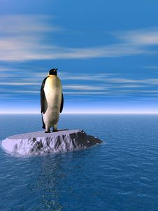 Free Penguin Stock Images - 5436584
