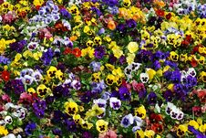 Free Flower Carpet Royalty Free Stock Photos - 5436898