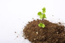 Free Sapling Growing Stock Images - 5437394