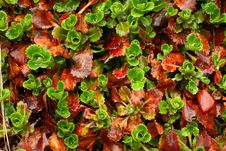Free Colorful Leafs Royalty Free Stock Image - 5437536