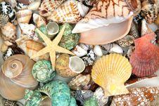 Free Colorful Seashells Stock Photos - 5439183