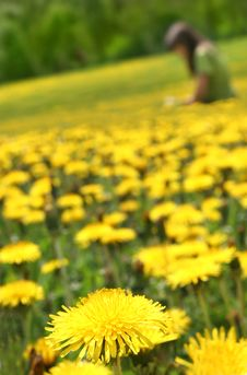 Free Dandelions Royalty Free Stock Image - 5439326