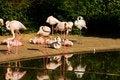 Free Phoenicopterus Roseus Stock Photography - 54371252