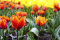 Free Red Tulips On The Flowerbed In The Park Royalty Free Stock Photos - 54390208