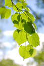 Free Leaves After Rain Stock Image - 5441231