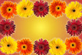 Free Floral Frame Stock Photo - 5443150