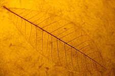 Free Leaf Background Stock Photos - 5440253