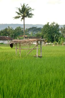 Free Shelter On Rice Field Stock Image - 5440441