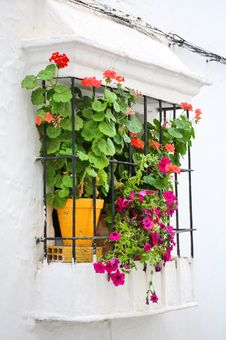 Free Red Flowers In Window Royalty Free Stock Photo - 5441115
