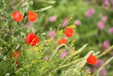 Free Summer Meadow Royalty Free Stock Photography - 5441157