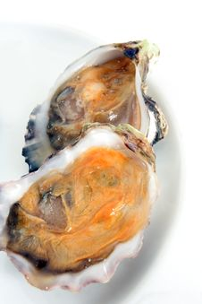 Free Oyster, Or Mussel Royalty Free Stock Image - 5441816