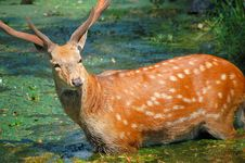 Free Deer Stock Image - 5442121