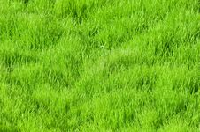Free Green Grass Stock Photos - 5443573