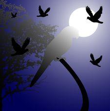 Free Night Scene With Birds Royalty Free Stock Image - 5444006