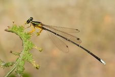 Free Damselfly Stock Photo - 5444540